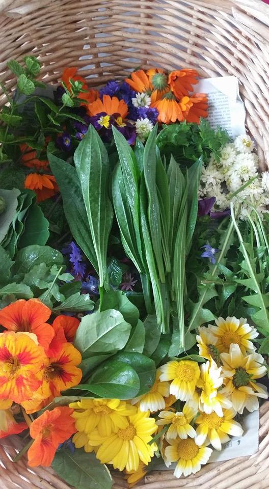 Panier de plantes et fleurs